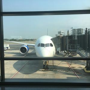 コロナ禍ペットと一緒に飛行機でアメリカから日本へ行く方法!