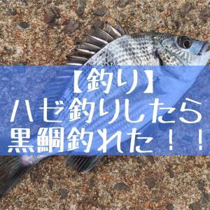 【釣り】ハゼ釣りしたら黒鯛釣れた!!
