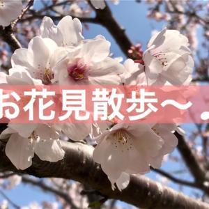 お花見散歩〜♪
