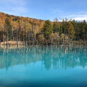 「美瑛」絶景!青い池