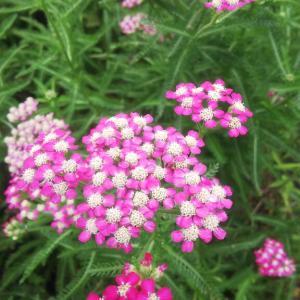 花の美しさを昆虫の目で楽しむこと