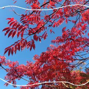 紅い葉。赤い花。
