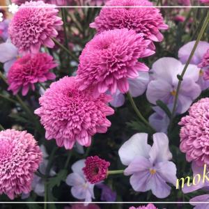 花の季節と宿題