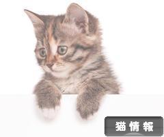 インスタグラムで沢山の猫ちゃんに癒されるには?
