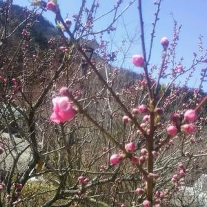 別れの春は、出会いの春。