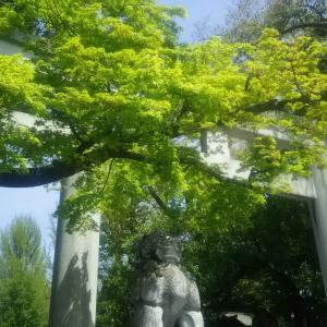 秩父神社の緑がキラキラしていました!