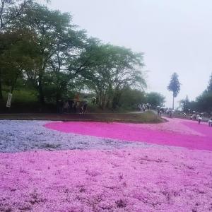 平成最後のお出かけ。「芝桜の丘」へ行きました。
