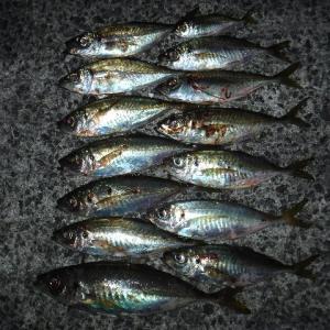 タチウオ・青物・アジ調査 神戸沖堤20191015