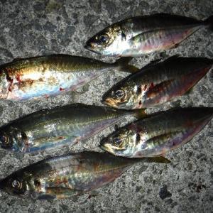 神戸沖堤防 状況調査 神戸沖堤20200329