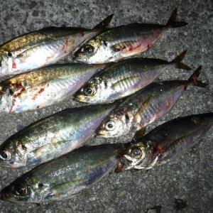神戸沖堤防 アジ調査 神戸沖堤202000702