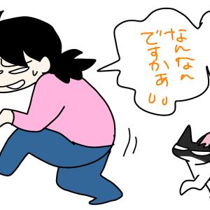 何かを訴える猫