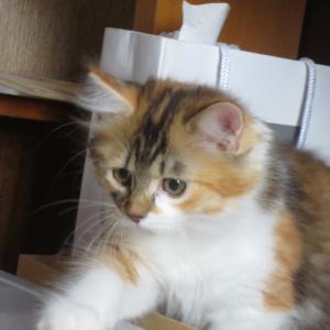 猫クイズ【ゆずみか問題171】どっちが、みかん?ゆず?