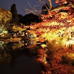 【名古屋紅葉ライトアップ2019】東山動植物園のもみじが見頃です♪