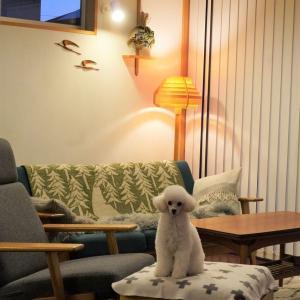 ◆愛犬トイプードルのマザコン度が凄いよ♡
