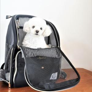 【PR・割引クーポン】おしゃれで機能的!愛犬とお出かけペットキャリー!