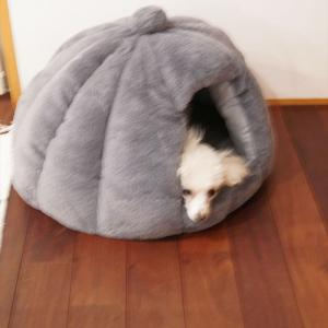 【トイプードルパピー犬成長記録18】かわいいドーム型ベッドが届いた♪愛犬の反応は・・・!?