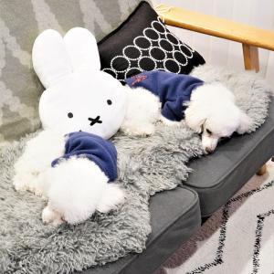 【トイプードルパピー犬】最近益々リンクしまくりな2匹~(´ω`*)