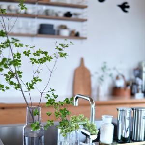 【インテリア】ドウダンツツジのあるキッチン全景♪季節を感じる枝もので模様替え♪