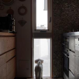 【ニトリ】夏の窓の熱と視線も同時にカット!窓貼りシートで超快適~♪