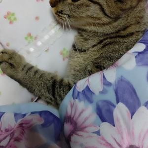 My bed feels cramped♪