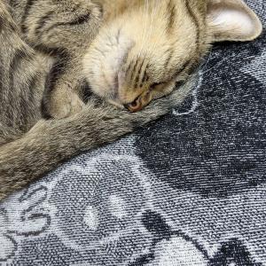 I've been sleepy all day..