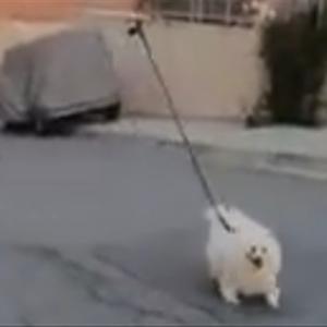 外出禁止令発動中のイスラエル、ドローンを使って犬の散歩w