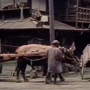 「今も昔も変わらないwww」100年前に撮影された交通トラブルの様子
