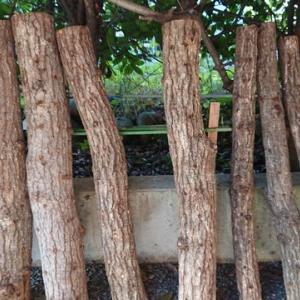 原木しいたけ栽培の勘違い