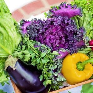 季節のめぐみをいただこう! ドイツ9月の野菜と果物