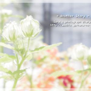 『ひそやかな花園』 角田光代