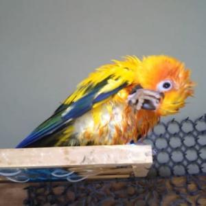 水浴び後の、羽繕いって可愛いですね(@^-^@)/