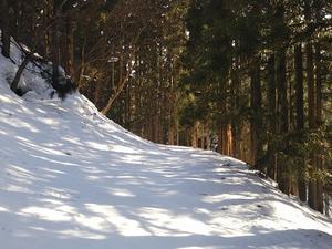 クロカンスキーで林道散策