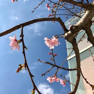 河津桜のネイチャーインスピレーション