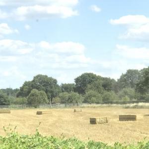 大麦が収穫された〜ドイツの畑の3ヶ月
