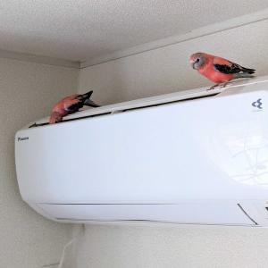 鳥さん、冬の暖房あれこれ。