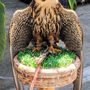 掛川花鳥園の鳥たち。