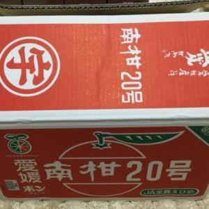 温州みかん「南柑20号」 愛媛県宇和島市