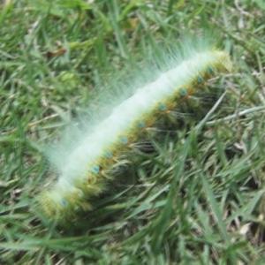 【生物動画】綺麗で可愛い毛虫を発見【虫動画】