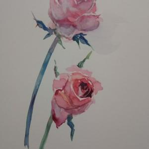 薔薇枯れる前