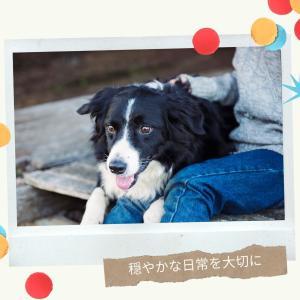 穏やかなコミュニケーション〜犬と私197〜
