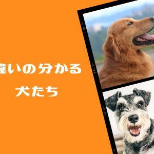 犬は区別が得意な動物〜犬と私202〜