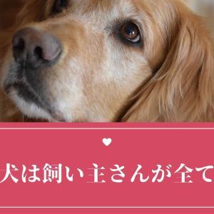 飼い主さんはスター〜犬と私204〜