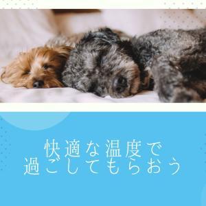 熱中症に注意〜犬と私239〜