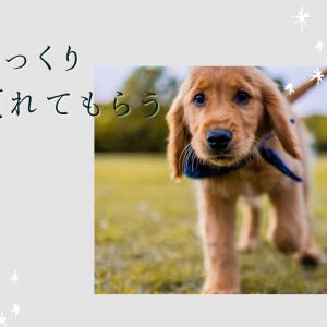 お外に慣れていない子のお散歩〜犬と私301〜