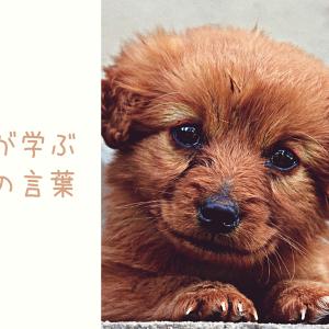 犬は人の言葉が分かるのか?〜犬と私304〜