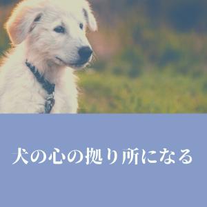 自信のある犬に育てるには〜犬と私332〜