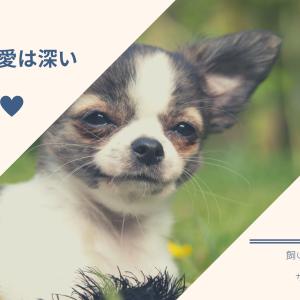 犬が感じる世界に思いを馳せる〜犬と私333〜