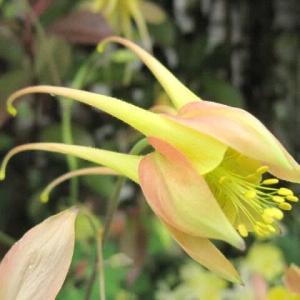 面白い・ユニークな花姿 2