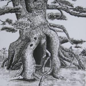 浮き根の松