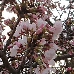 春、新しい時間がはじまる